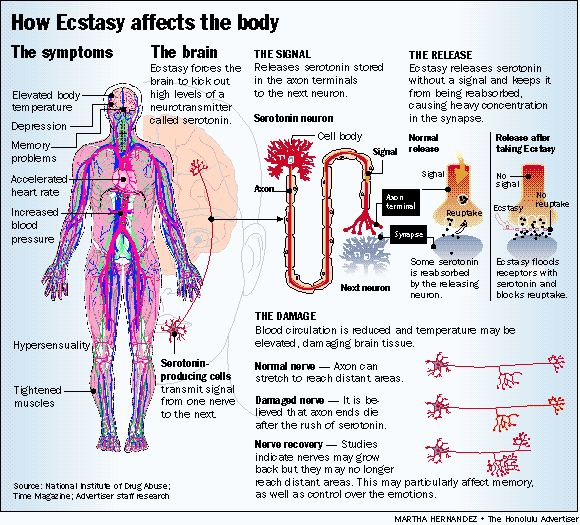 effects-of-ecstasy-to-the-brain-and-body